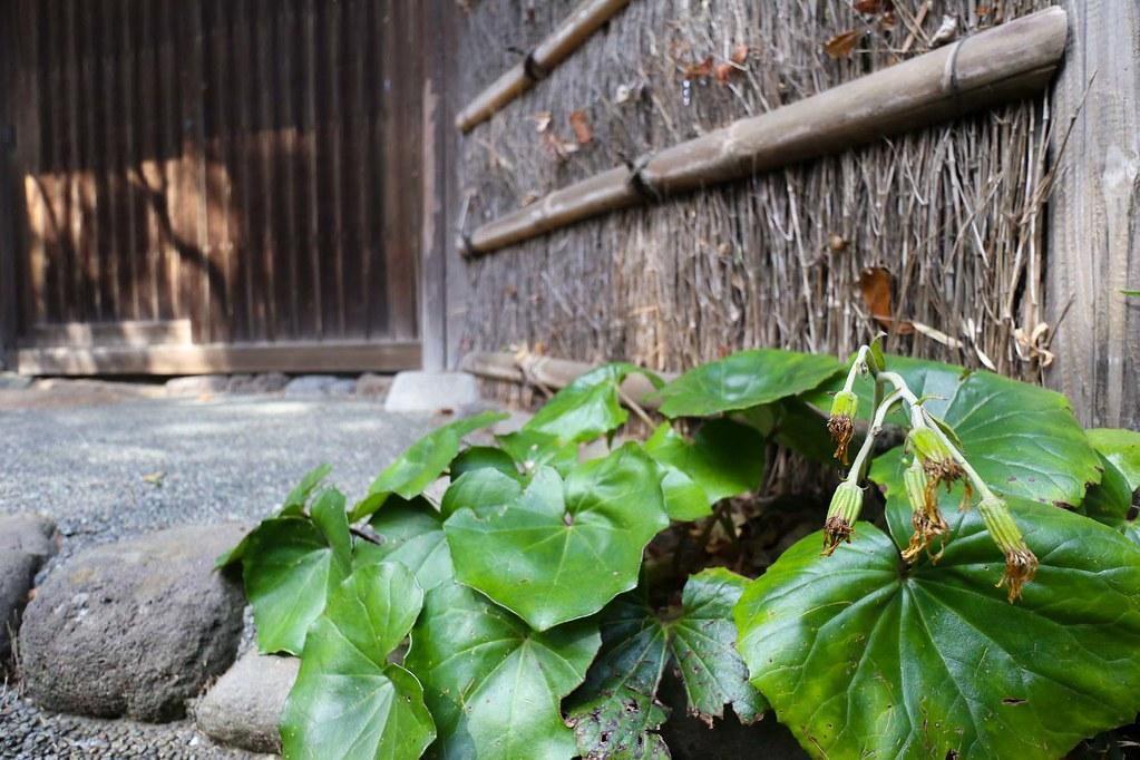 鎌倉の土地/古民家付き