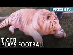 Press TV News : TIGER plays football in Moscow