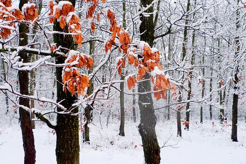 landscape pădure ilfov românia vaduanei brănești iarnă winter nature lx3 panasonic