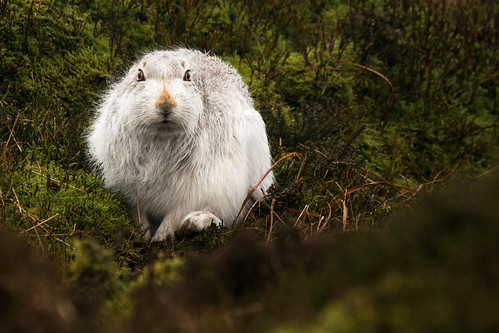 A soggy hare