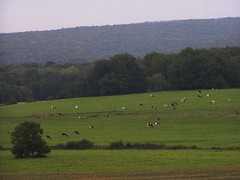 20070831 12001 0707 Jakobus Wiese Hügel Weite Hügel Kühe
