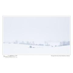 Through the Snow, Rural Waterloo, Ontario