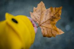 Herbst gefunden