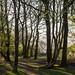Footpath through the woods by Joe Dunckley