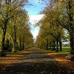 Tree line walkway