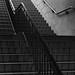 Adelphi Steps