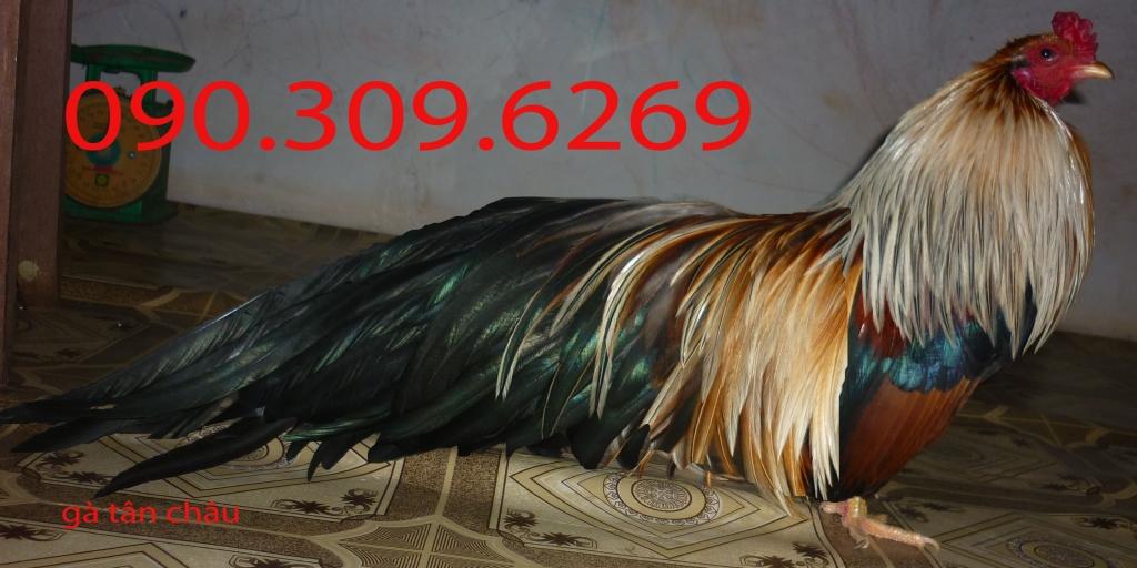 40473520812_e2580a3f1c_o.jpg