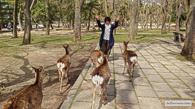 Setengah Hari di Nara - Nara Deers