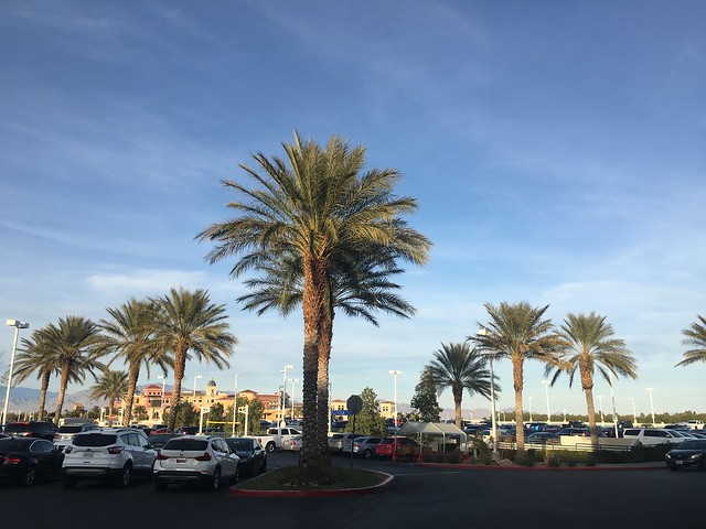 Summerlin,  palm trees