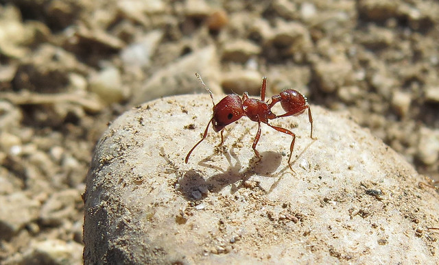 Ant and its Shadow