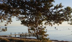 Thomson's Bay
