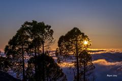 Sol entre árboles