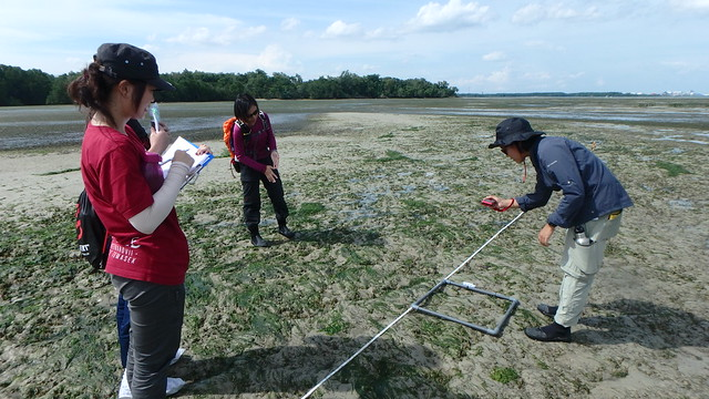 Ubin Comprehensive Biodiversity Survey
