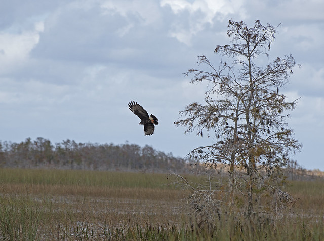 Everglades and Francis S. Taylor WMA