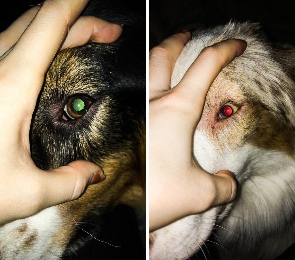elämä kahden koiran kanssa-52-tile