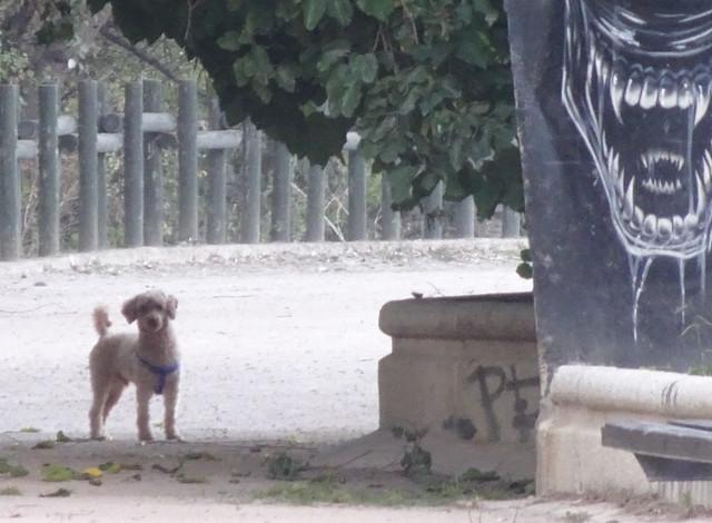 Inocente perrito