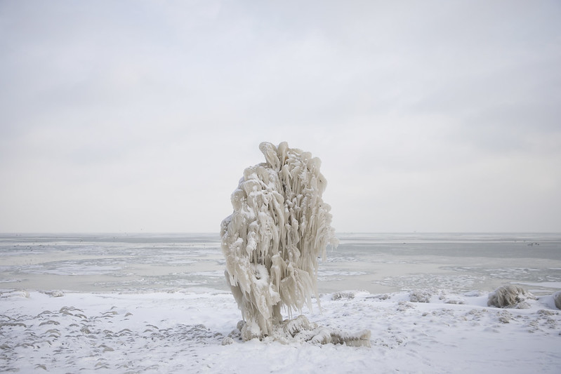 Iced Tree on Lake Michigan