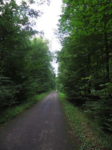 20140804 02 093 Jakobus Wald Weg