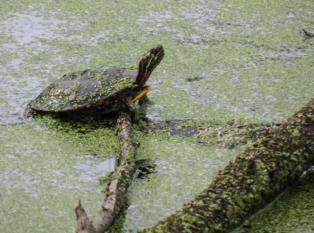 Turtles arise!