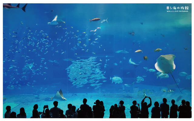 沖繩美麗海水族館-19