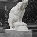 %27Polar+Bear%27+--+Bowdoin+College+Mascot+Brunswick+%28ME%29+September+2017