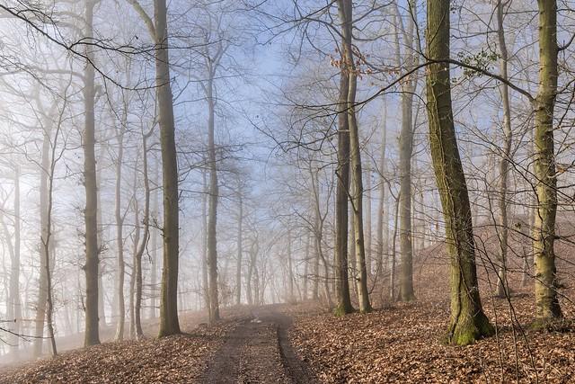 *Moselsteig - Winter*
