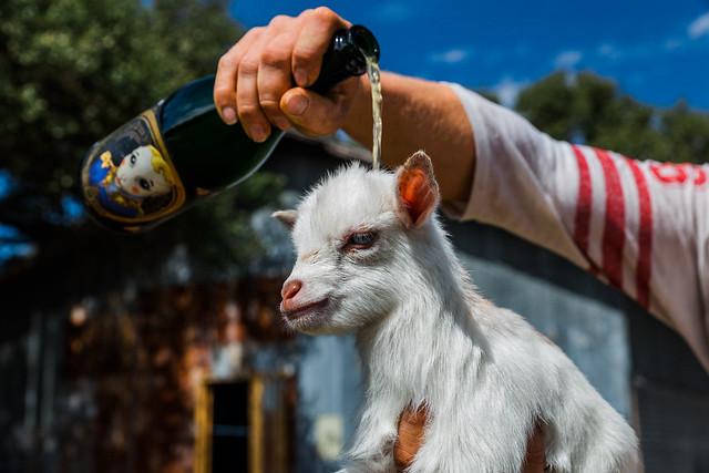 Goats 2-27-18-3146