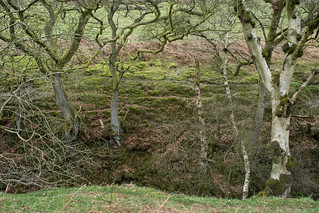 20170330-73_Dundale Griff - Bare Trees