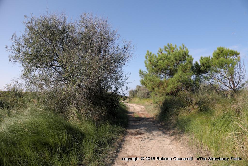 Il sentiero sulla duna costiera