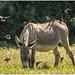 L'âne et ses acolytes