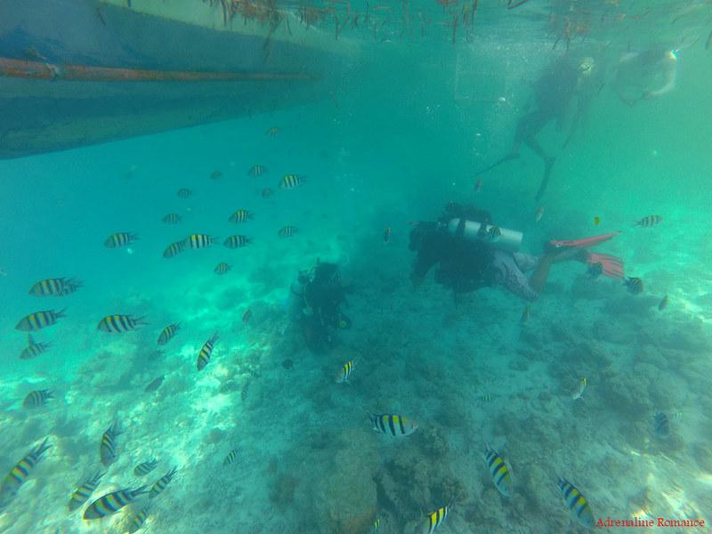 Scuba divers doing DSD