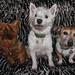 Terrier Trio by Durley Beachbum