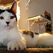 Lady Dinah's Cat Emporium London (2016)