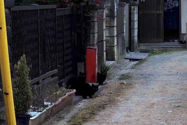 Today's Cat@2018-02-23