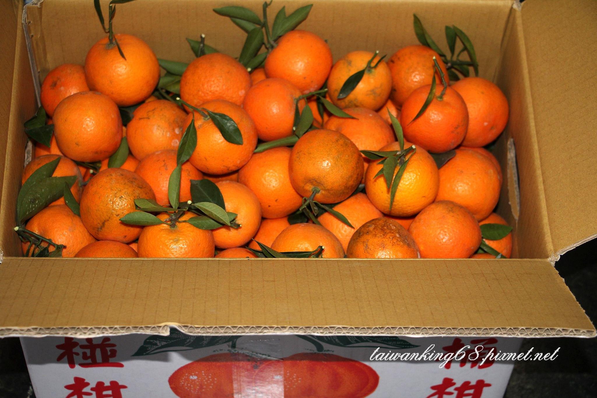 阿坤伯種ㄟ桶柑