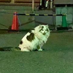 通りがかりの猫