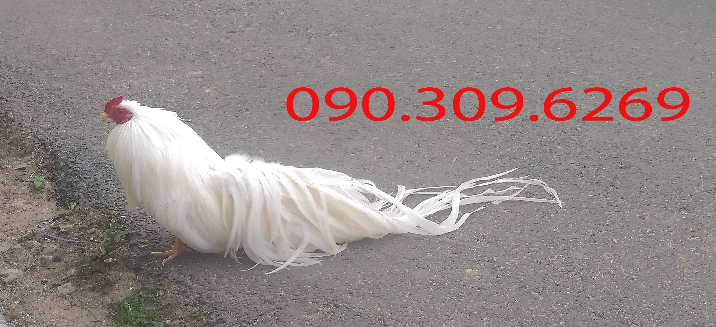38937920894_1c506b01fc_o.jpg