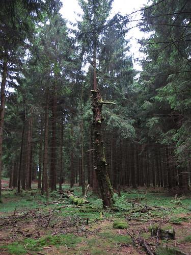 20170605 07 146 Regia Wald Baum