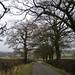 Pikers Lane, Allesley