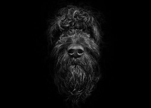 Ziggy Portrait No 2