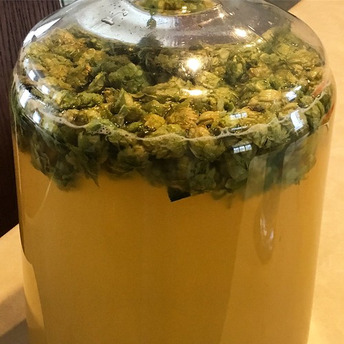 dry hopping the Kirkland Challenge Mead