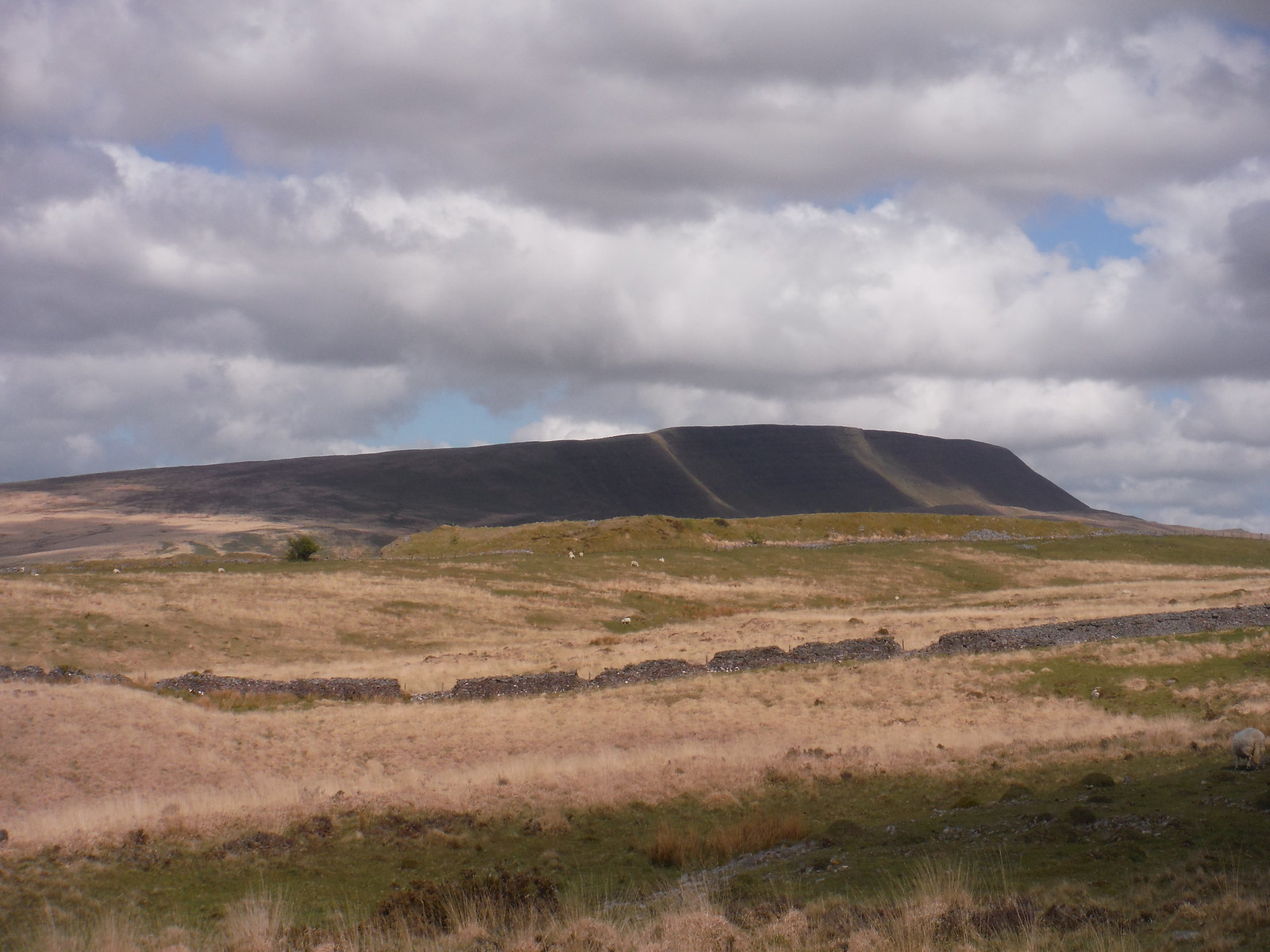 Fan Hir Escarpment, from Dismantled Tramway SWC Walk 307 - Fforest Fawr Traverse (Craig y Nos to Llwyn-y-celyn)
