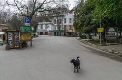 Winter Yalta