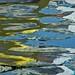 Paignton Harbour Reflection 4