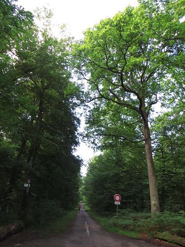 20140804 02 102 Jakobus Wald Bäume Weg Pilger ElisabethB