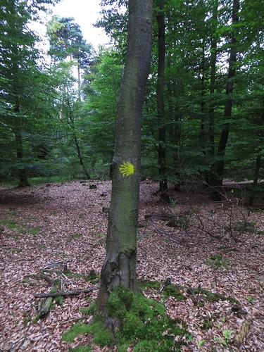 20140804 02 499 Jakobus Wald Weg Muschelsternzeichen