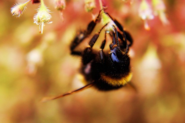 bee-spoke