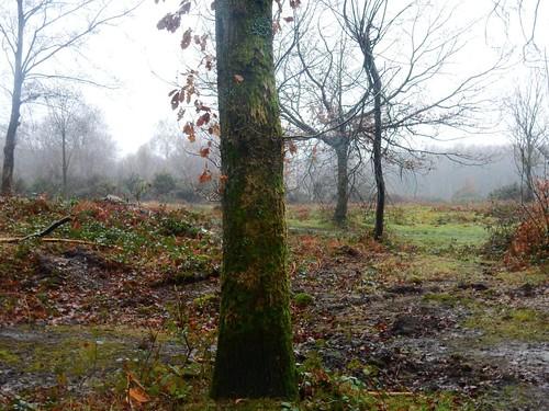 Trees on the heath
