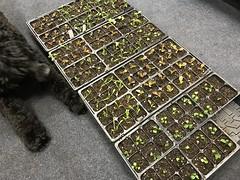 early seedlings IMG_1642
