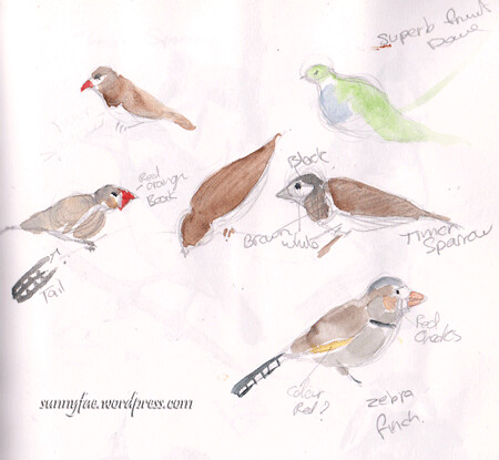 bird reserch sketches drawn at the zoo